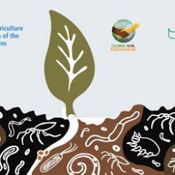nacionalinė biologinės įvairovės strategija ir kenijos veiksmų planas